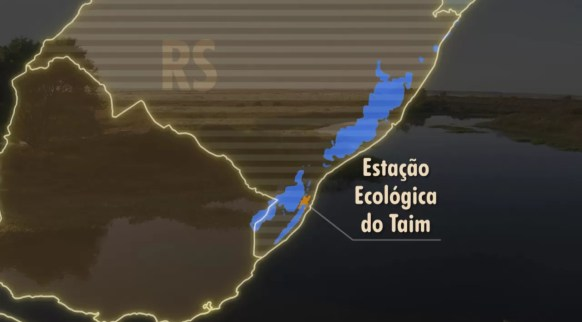 Taim (Foto: Arte / TV Globo)