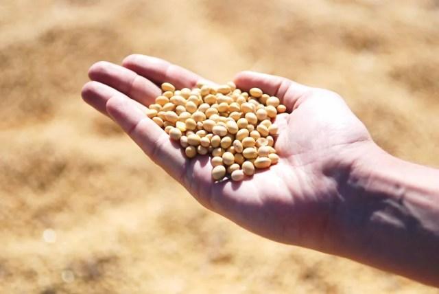 Procura pela soja no mundo está maior do que a produção — Foto: Pixabay