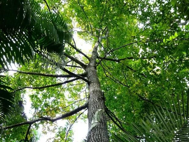 Espécies nativas ainda são encontradas na área urbana de Manaus, segundo Semmas (Foto: Mário Bentes / Acervo Ascom Inpa)