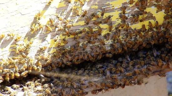 Por causa da seca, o número de apicultores em plena atividade no RN caiu pela metade (Foto: Reprodução/Inter TV Cabugi)