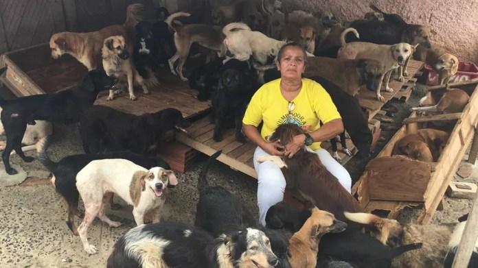 Mulher cria em casa 48 gatos e mais de 300 cães encontrados na rua na BA — Foto: Alan Alves/G1