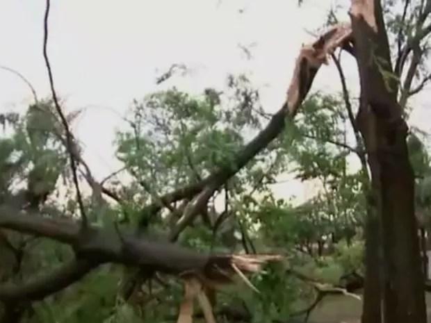 Galhos de árvores caíram e danificaram a rede de energia elétrica (Foto: Reprodução / TV TEM)