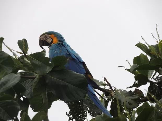 Estudo fauna Araraquara (Foto: João Henrique Barbosa/Arquivo pessoal)