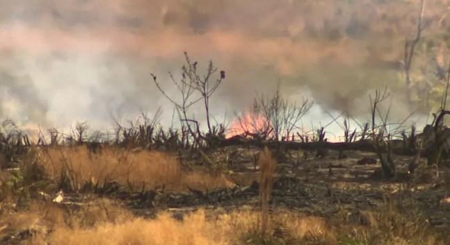 Chamas atingem mata de cerrado em Itirapina — Foto: Reprodução/EPTV
