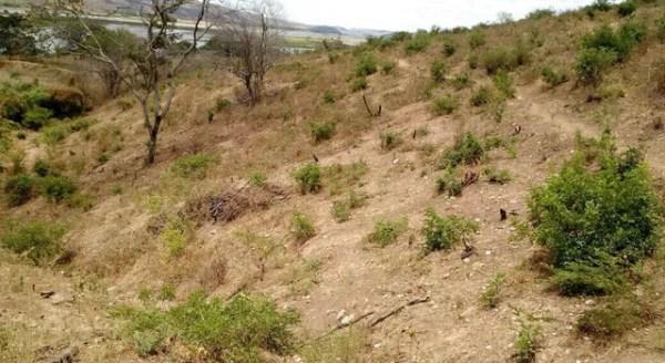 Pontos foram localizados através do geoprocessamento de diversas áreas de possíveis desmatamentos no interior do estado (Foto: Divulgação/BPA)