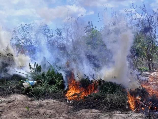 Ação visa diminuir a oferta da droga na capital pernambucana, no Agreste e no Sertão (Foto: Divulgação/Polícia Federal)