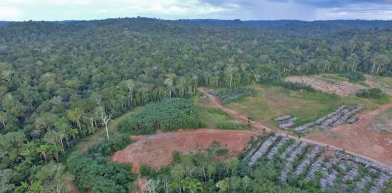 Derrubada de árvores prejudica vida de espécies animais e diminui volume de água liberada na natureza (Foto: Arquivo TG)