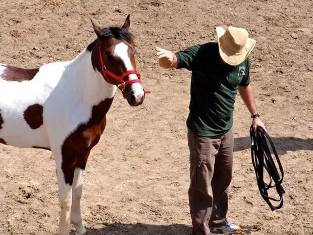 No método de doma 'Join-up', praticamente não se toca no cavalo (Foto: Arquivo pessoal)