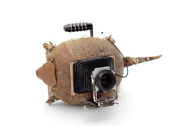 Caso de tatu também foi usado pelos artistas para construir máquina fotográfica (Foto: Divulgação/tonk.ch)