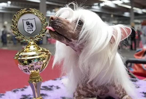 Cristado chinês 'Batiste von Shinbashi' faturou título de competição canina em Erfurt (Foto: Jens Meyer/AP)