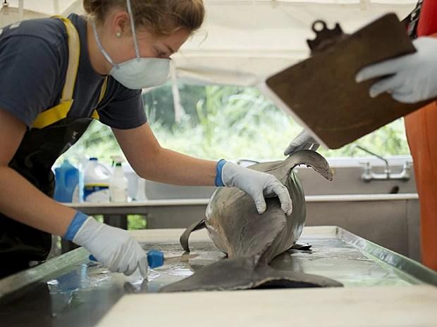 Funcionária do Aquário de Virgínia, nos EUA, faz necrópsia em golfinho morto na terça (6) (Foto: The Virginian-Pilot,L/Todd Spencer/AP)