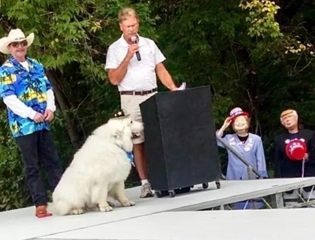 Duke, de 9 anos, da raça cão dos pirineus, se tornou o primeiro prefeito honorário da cidade de Comrorant (Foto: Deb Rick/AP)