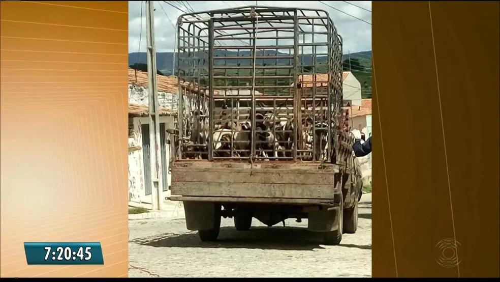 Cerca de 30 animais de rua foram sacrificados no município de Igaracy, no Sertão paraibano (Foto: Reprodução/TV Paraíba)