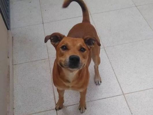 Image result for companion dog