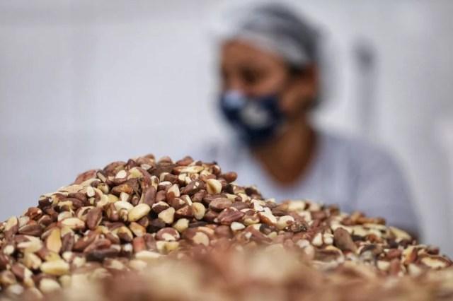 Castanha-do-pará produzida em Juruena (MT) — Foto: Secom-MT
