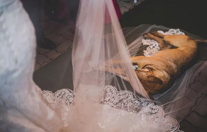 Cachorro invadiu cerimônia e deitou no véu da noiva em Laranjal Paulista (Foto: Arquivo Pessoal/Felipe Paludetto)