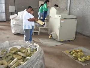 Gomos serão vendidos a empresa especializada (Foto: Divulgação/Prefeitura de Ponta Grossa)