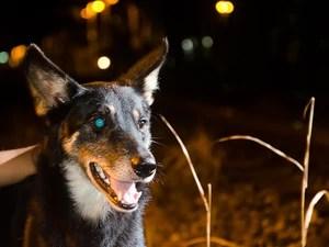 Animal está assustado, segundo Maria de Lourdes. (Foto: Thiago Leon/THXPHOTO)