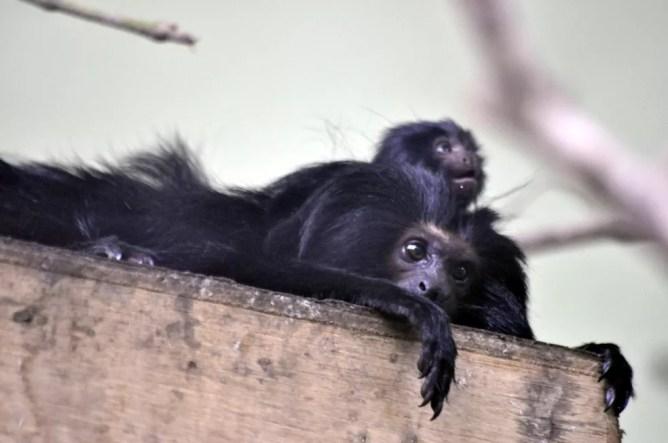 Filhote nasceu no zoológico de Pomerode  — Foto: Zoo Pomerode/Divulgação