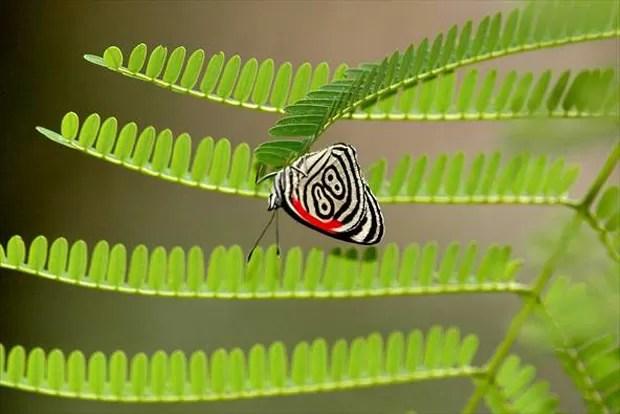 Resultado de imagem para borboleta 88