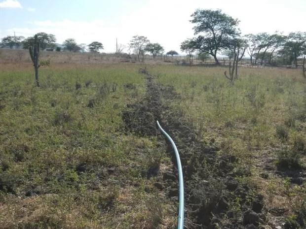 Sistema de irrigação passava por 2 km de terra até chegar na plantação de maconha (Foto: Divulgação/Polícia Federal)