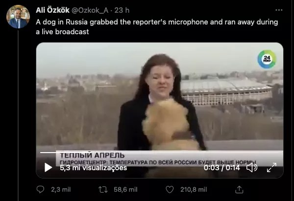 The viral tweet showing the stealing of Nadezhda Serezhkina's microphone by a dog (Photo: Twitter)