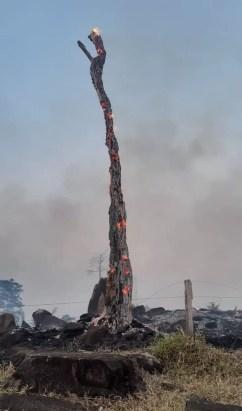 Árvore foi atingida pelo fogo na área urbana de Jaru — Foto: Corpo de Bombeiros/Divulgação