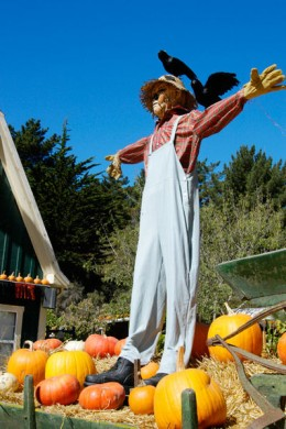 Scarecrow (Photo credit: Wikipedia Commons)