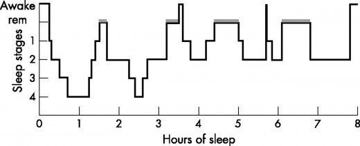 The sleep cycle over the course of the night has many stages where the body completes different tasks in order to restore itself.
