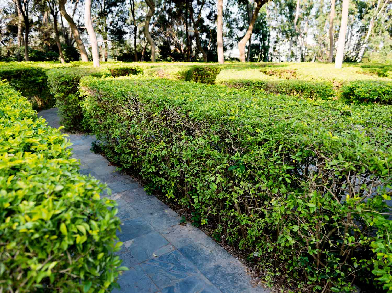 Gazon Terreau Serre Et Entretien Du Jardin Leroy Merlin