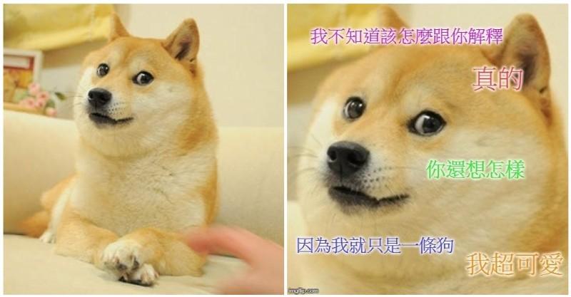 經典梗圖「神煩狗」本尊曝光!「爆紅前後對比」網感嘆:歲月催狗老~ - LOOKER 毛小孩