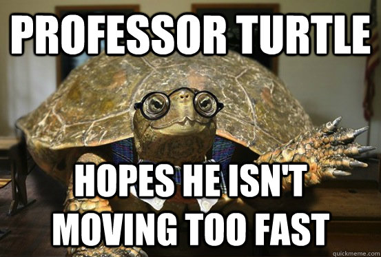 Image result for professor turtle hopes he isn't moving too fast