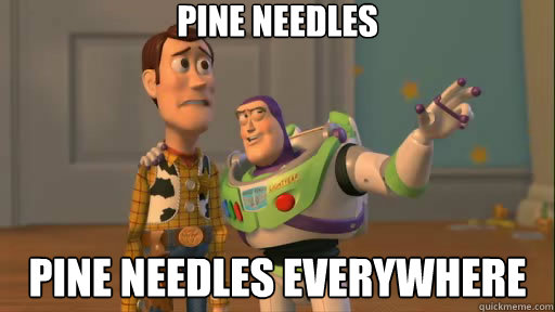Image result for pine needles everywhere gif
