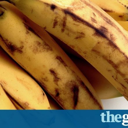 Britons throw away 1.4m edible bananas each day, figures show
