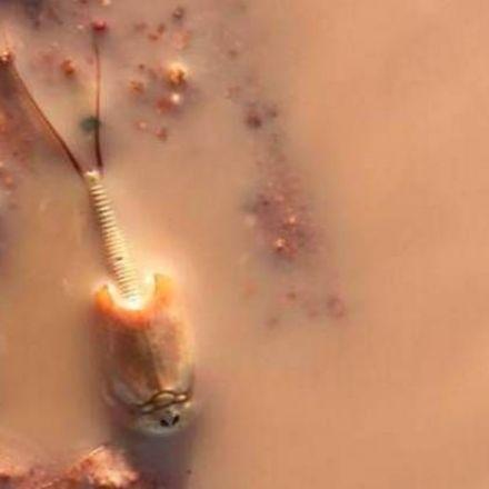 Prehistoric shrimp emerge from Australian desert after heavy rain