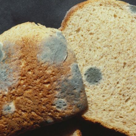 Science Explains Why Picking the Mold Off Your Bread Doesn't Work