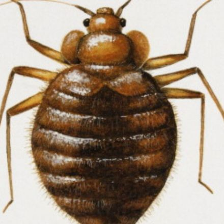 Is your city crawling with bed bugs?
