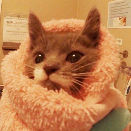 Inside a 24 hour kitten nursery. Your cat approves