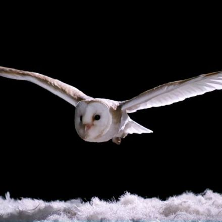 How Does An Owl Fly So Silently? - Super Powered Owls