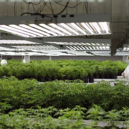 NAFTA's biggest loser: the US, after Canada and Mexico get rich trading marijuana