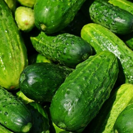 'Cucumbers grow better to rock music'