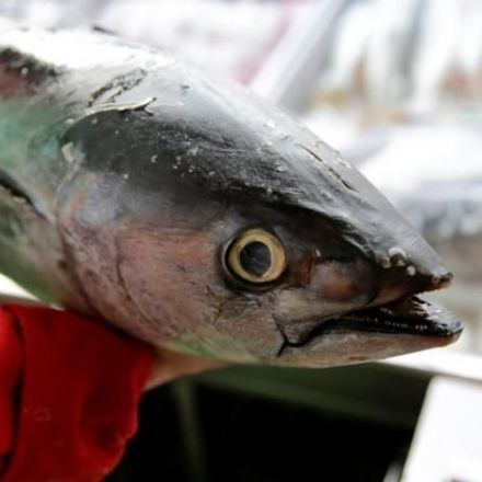 WTO lets Mexico slap trade sanctions on U.S. in tuna dispute