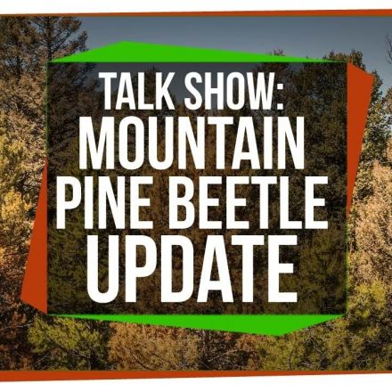 Mountain Pine Beetle Update: SciShow Talk Show