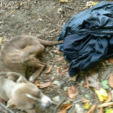 Philadelphia Officer Arrested Over Dog Found in Trash Bag