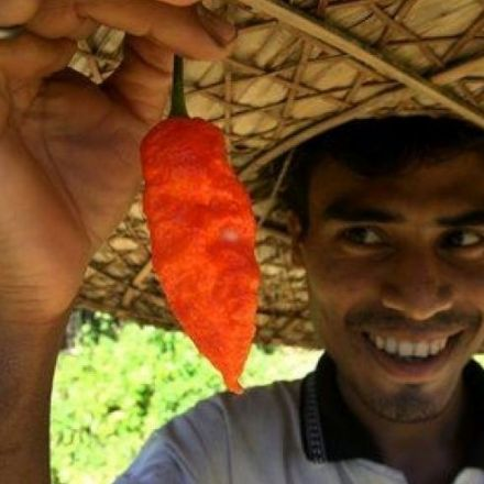 Ghost Pepper Sends Man To Hospital For 23 Days