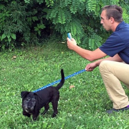 Animal Shelter Enlists Pokemon Go Players to Walk Dogs