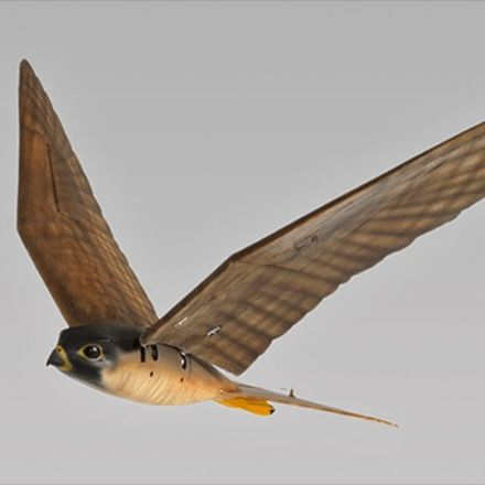 Robotic falcon will chase birds at Canadian airport