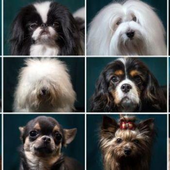 Dog family tree reveals hidden history of canine diversity