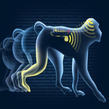 A New Wireless Brain Implant Helps Paralyzed Monkeys Walk. Humans Could Be Next