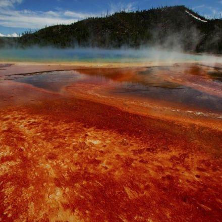 Break in the Search for the Origin of Complex Life